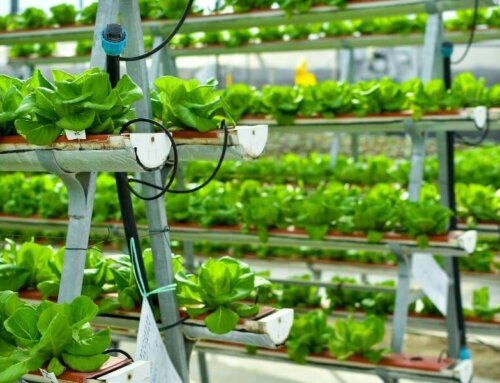 How a Vertical Hydroponic System Works